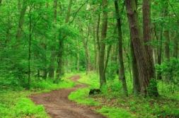 winding-path